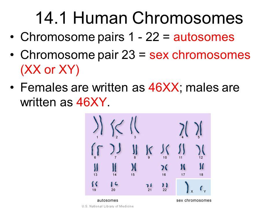 14.1 Human Chromosomes Chromosome pairs 1 - 22 = autosomes
