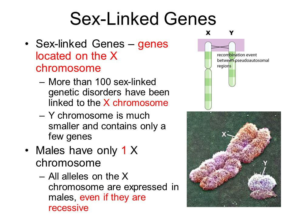 Sex-Linked Genes Sex-linked Genes – genes located on the X chromosome