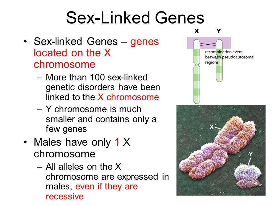 Sex-Linked Genes Sex-linked Genes – genes located on the X chromosome