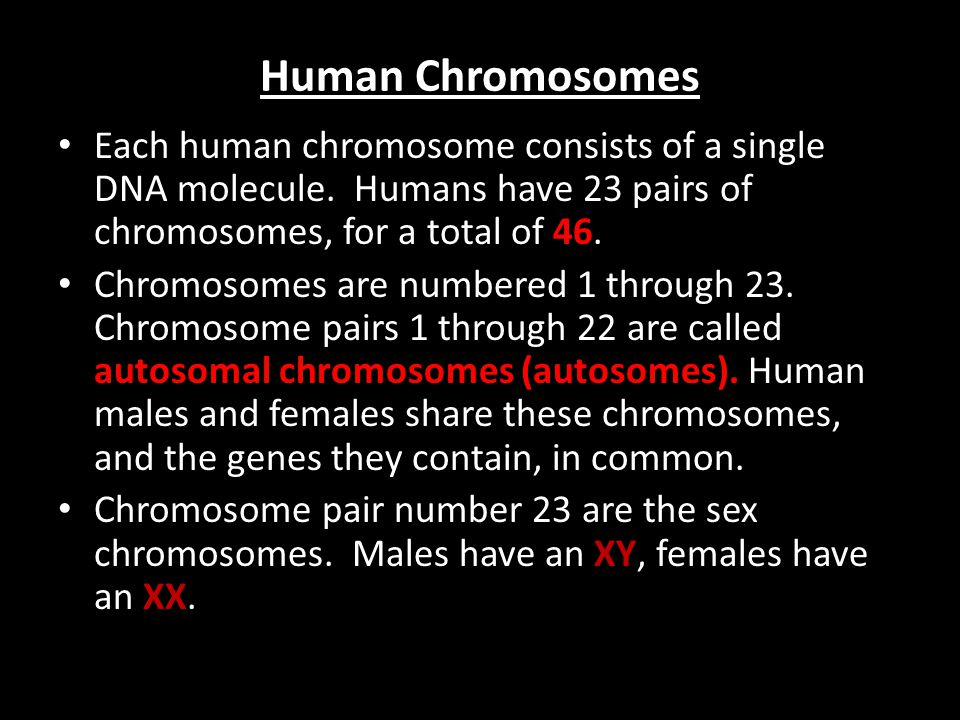 Human Chromosomes Each human chromosome consists of a single DNA molecule. Humans have 23 pairs of chromosomes, for a total of 46.