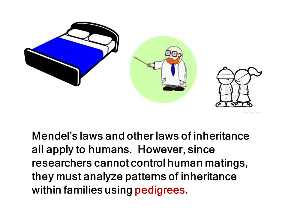 Mendel's laws and other laws of inheritance all apply to humans