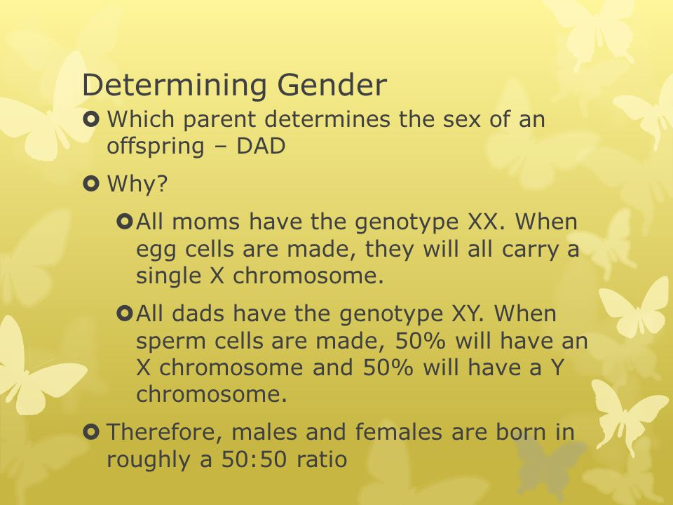 Determining Gender Which parent determines the sex of an offspring – DAD. Why