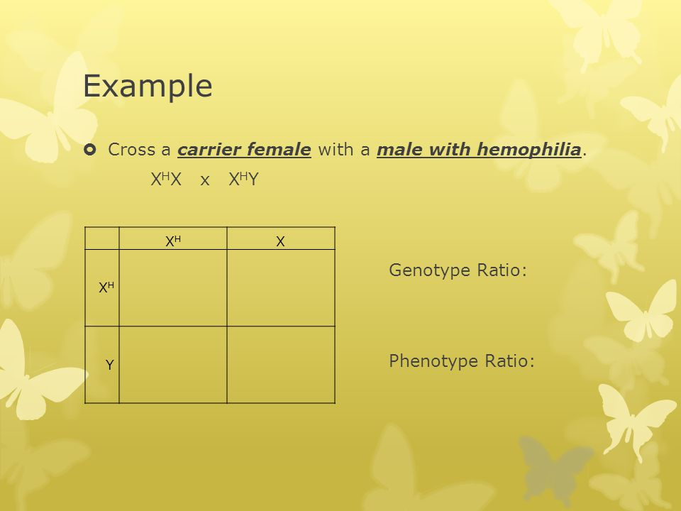 Example Cross a carrier female with a male with hemophilia. XHX x XHY