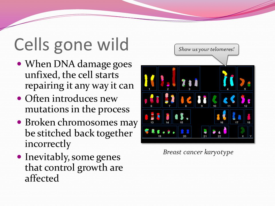 Chromosome affected in breast cancer