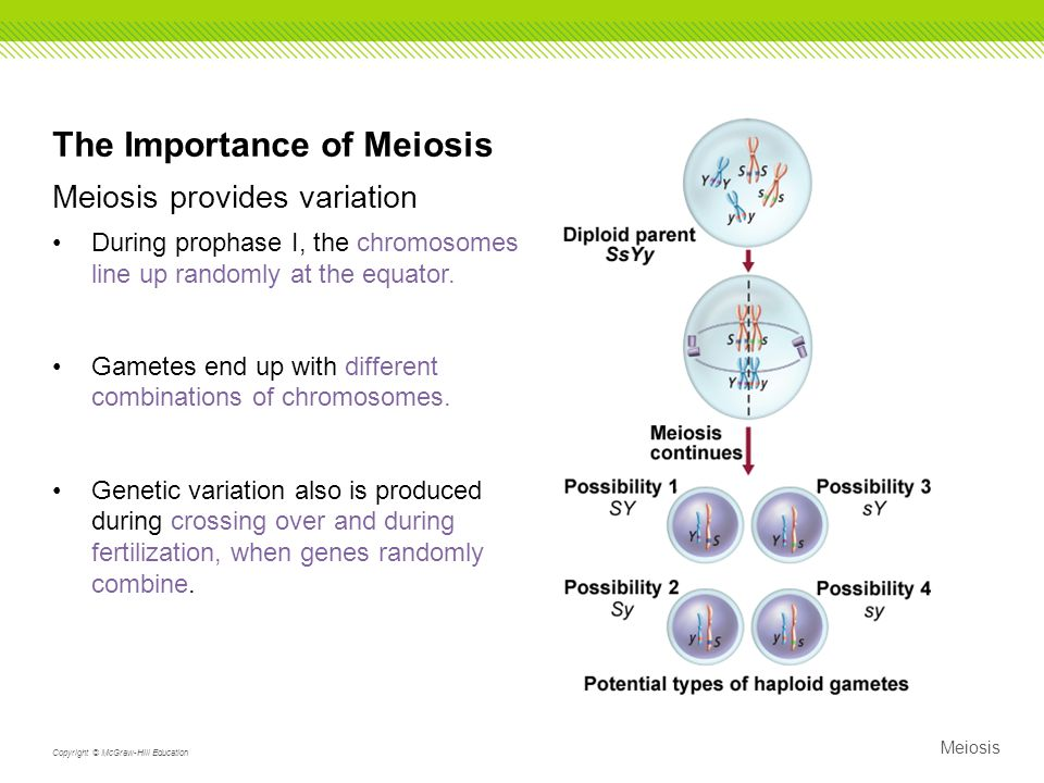 The Importance of Meiosis