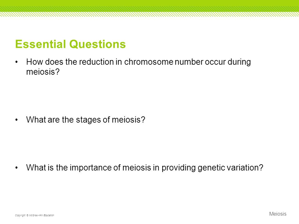 Essential Questions How does the reduction in chromosome number occur during meiosis What are the stages of meiosis