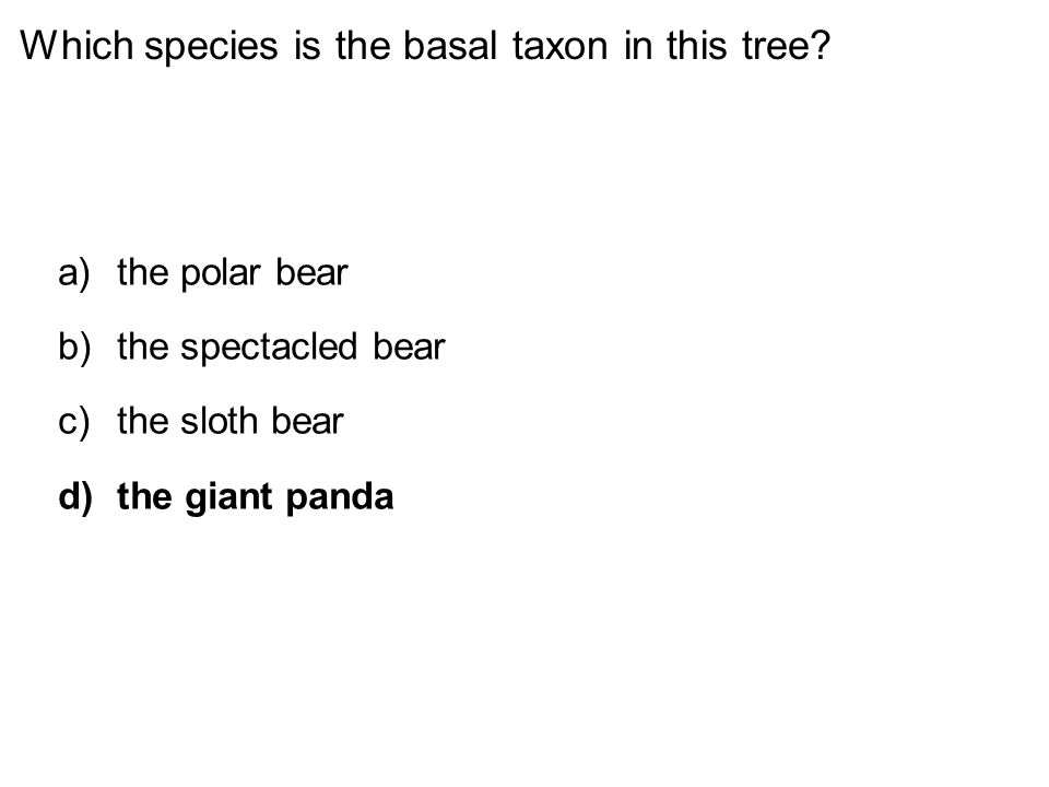 Which species is the basal taxon in this tree