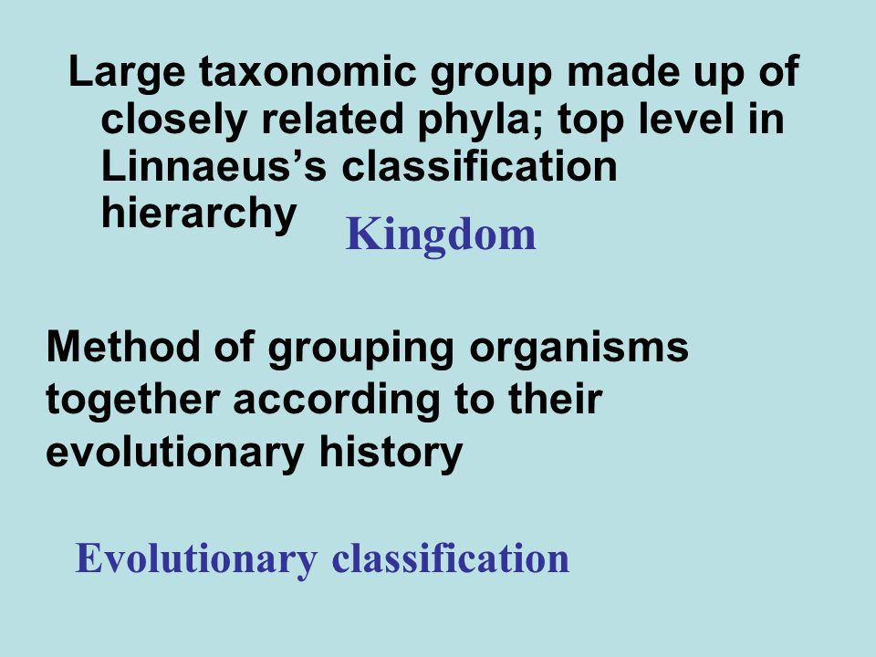 Large taxonomic group made up of closely related phyla; top level in Linnaeus's classification hierarchy