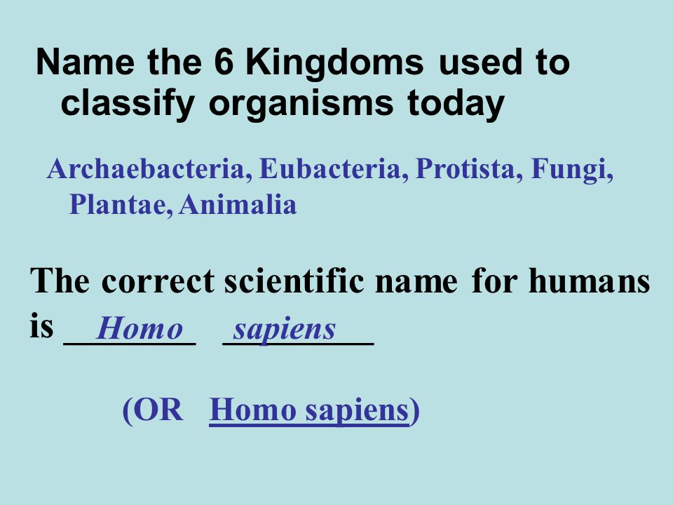 Name the 6 Kingdoms used to classify organisms today