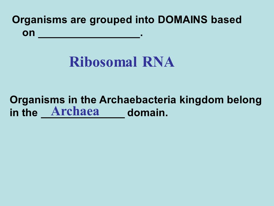 Organisms are grouped into DOMAINS based on _________________.