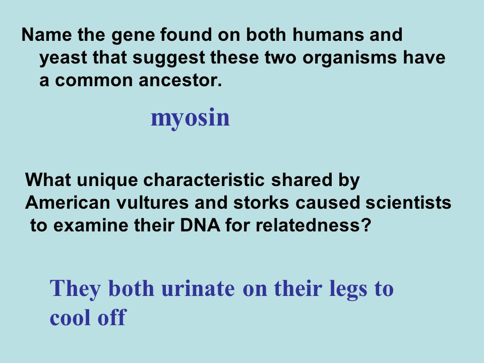 myosin They both urinate on their legs to cool off