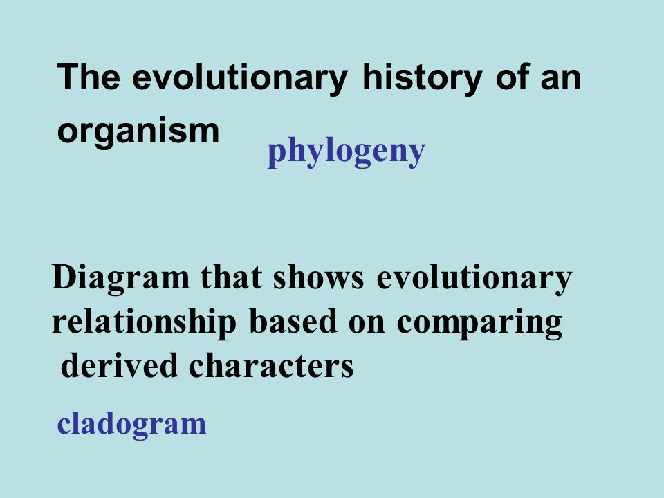 The evolutionary history of an organism phylogeny