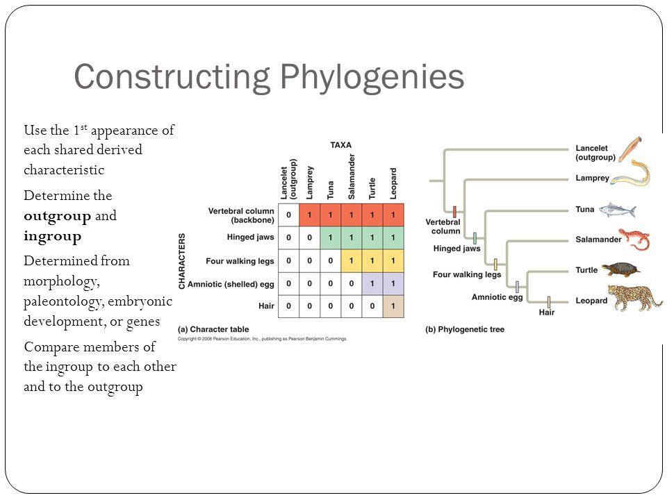 Constructing Phylogenies