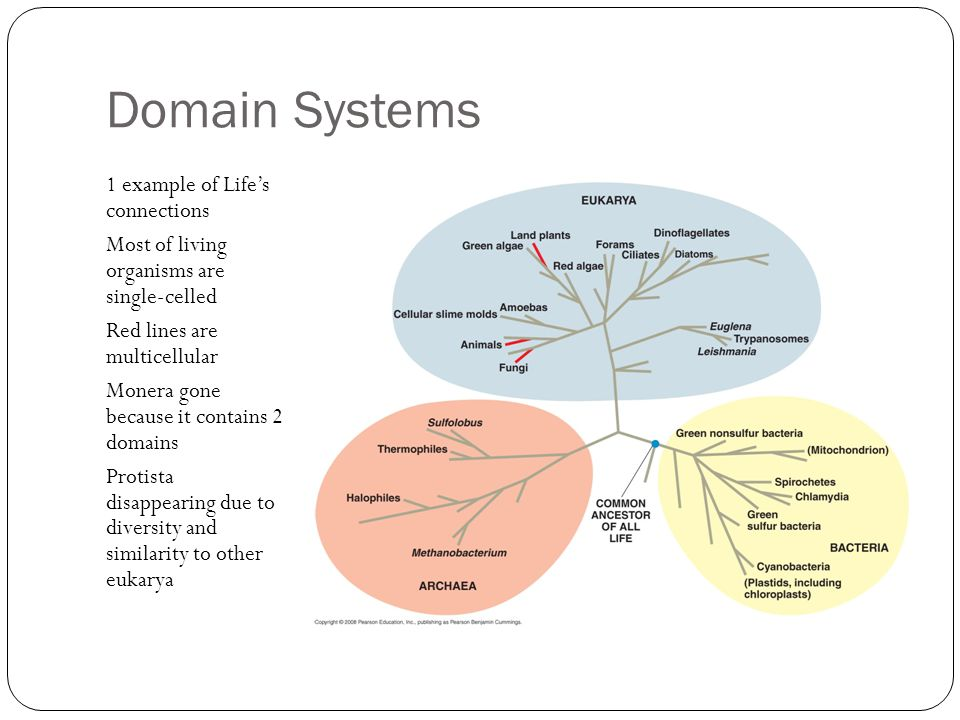Domain Systems 1 example of Life's connections