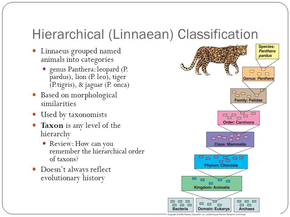 Hierarchical (Linnaean) Classification