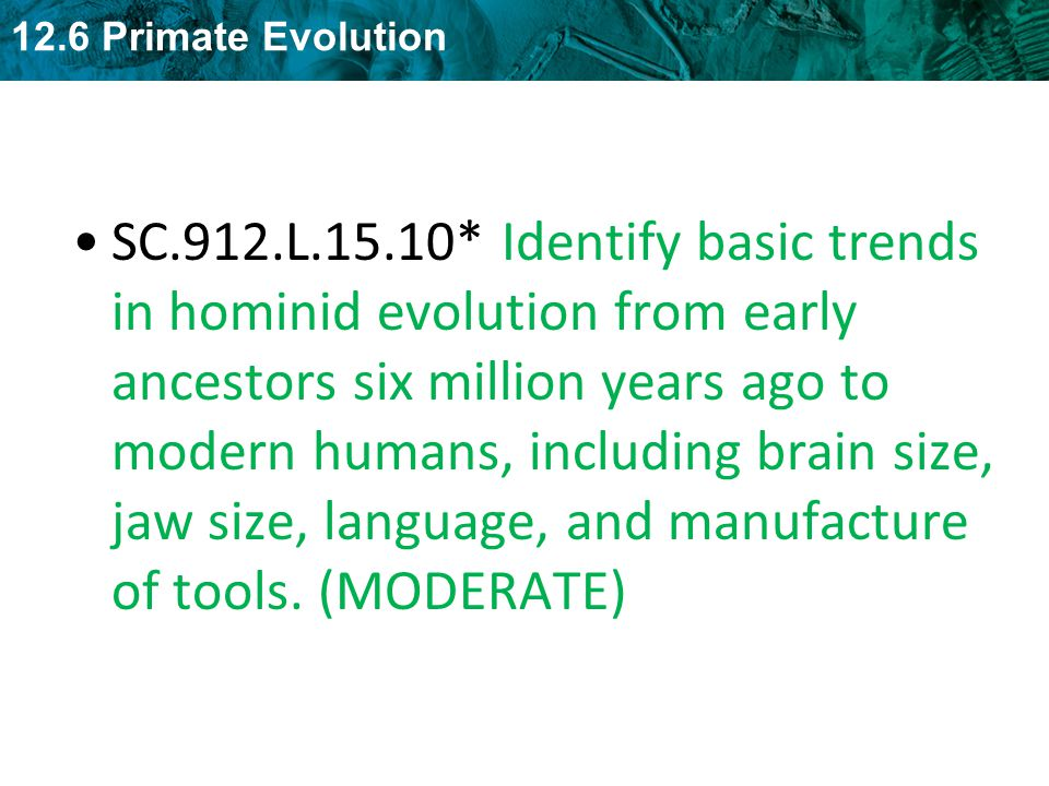 SC.912.L.15.10* Identify basic trends in hominid evolution from early ancestors six million years ago to modern humans, including brain size, jaw size, language, and manufacture of tools.