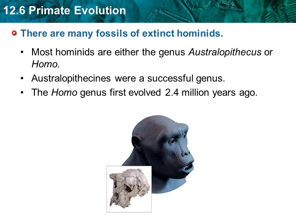 There are many fossils of extinct hominids.