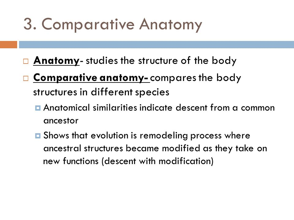 3. Comparative Anatomy Anatomy- studies the structure of the body