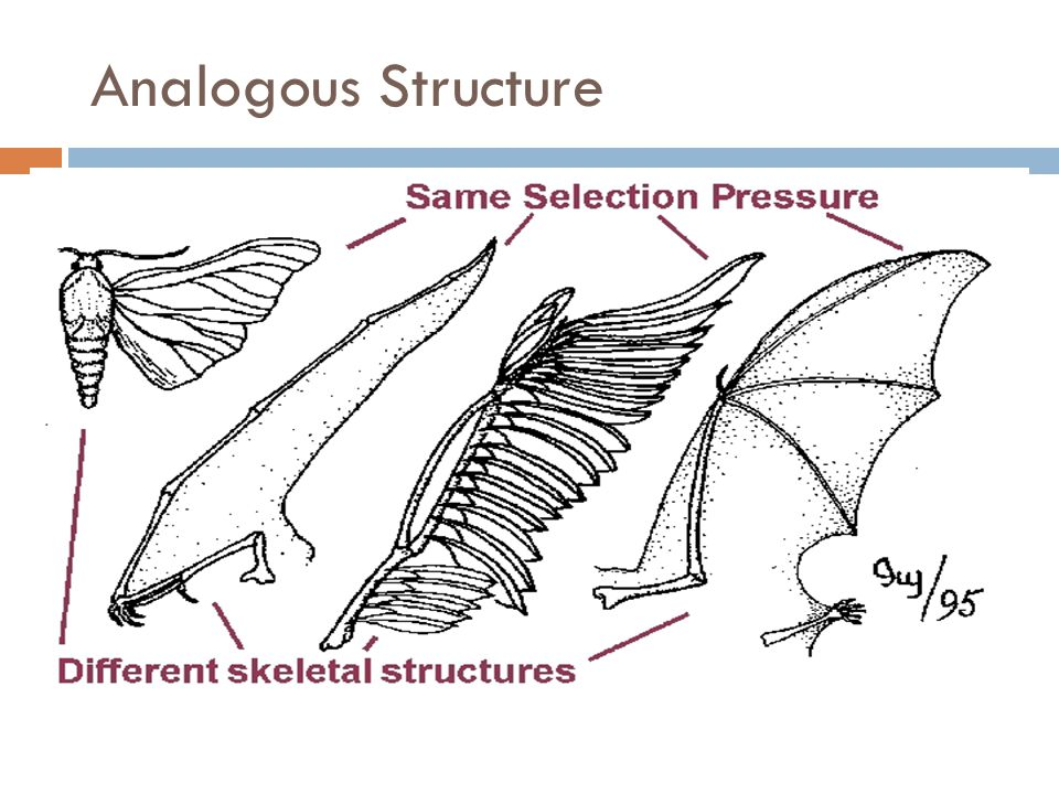 Analogous Structure