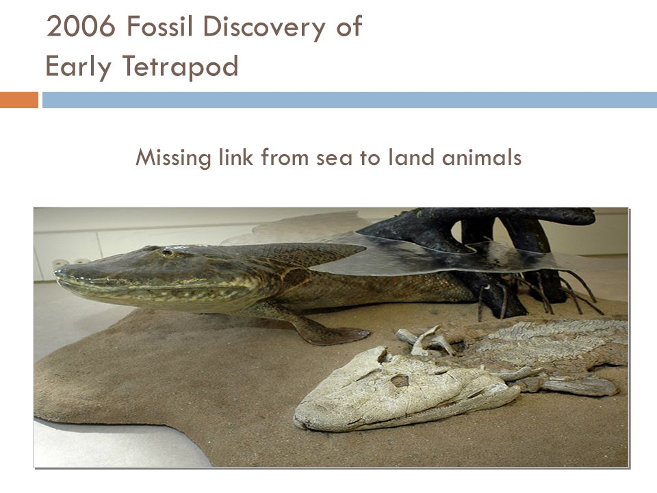 2006 Fossil Discovery of Early Tetrapod