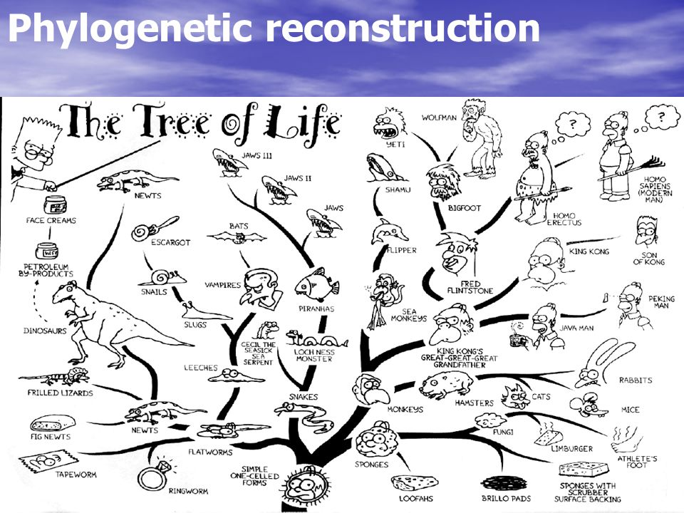 Phylogenetic reconstruction