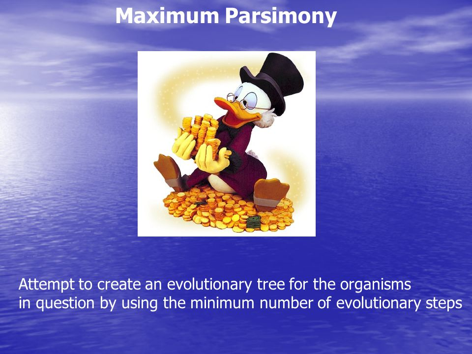 Maximum Parsimony Attempt to create an evolutionary tree for the organisms.