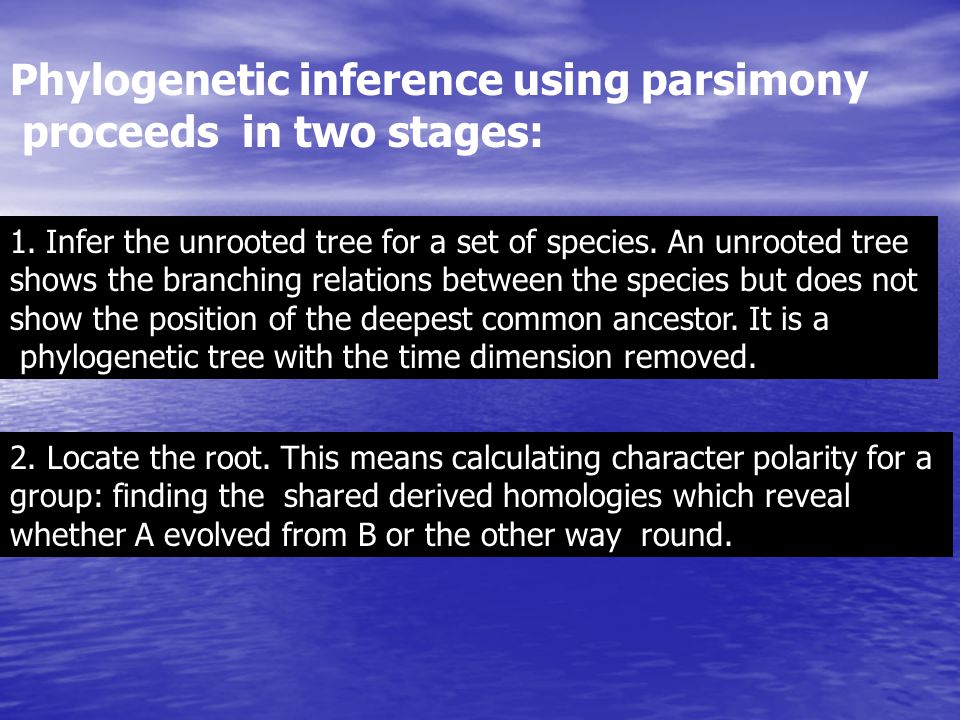 Phylogenetic inference using parsimony proceeds in two stages:
