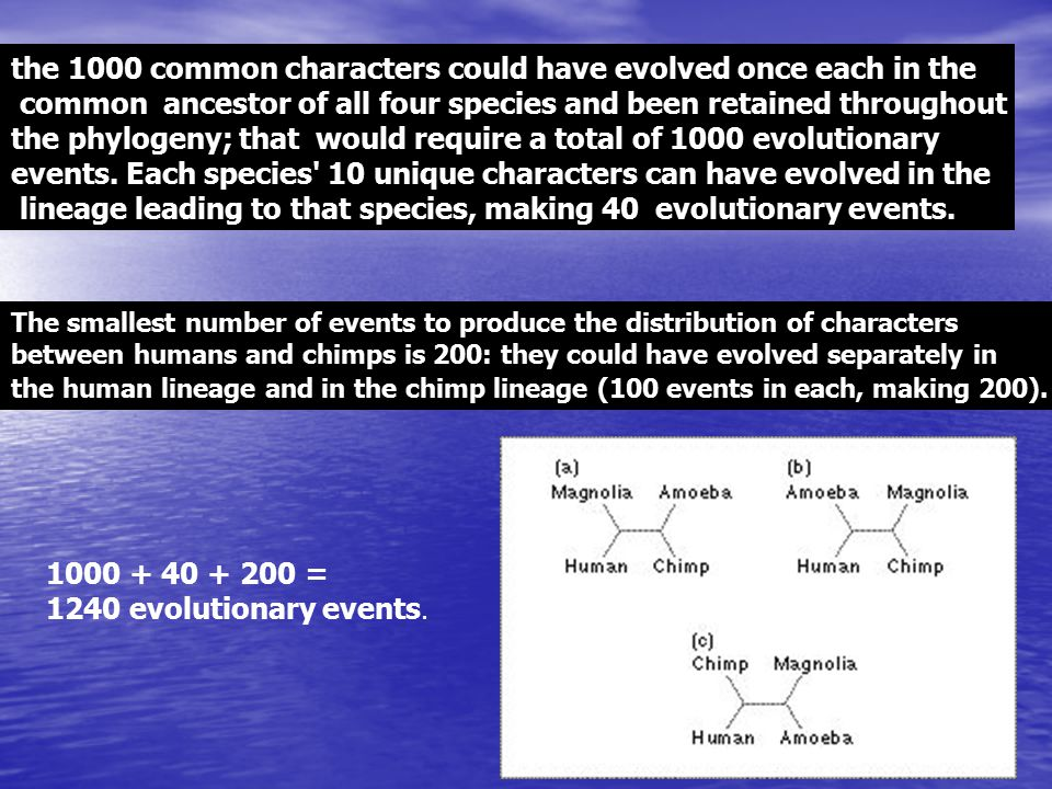 the 1000 common characters could have evolved once each in the