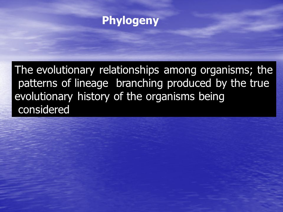 Phylogeny The evolutionary relationships among organisms; the. patterns of lineage branching produced by the true.