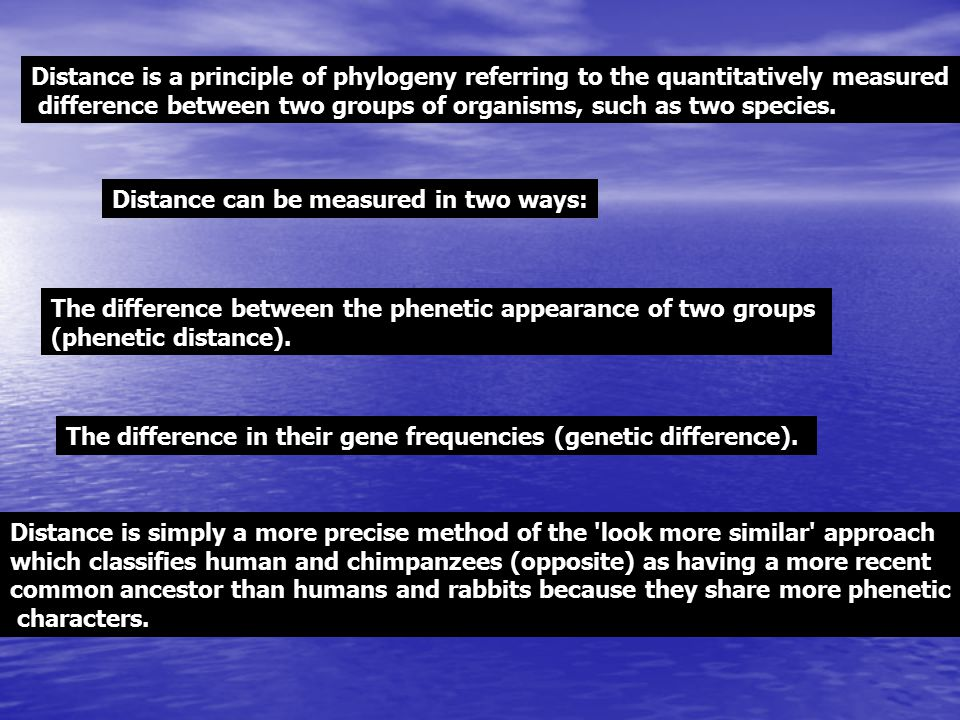 Distance is a principle of phylogeny referring to the quantitatively measured