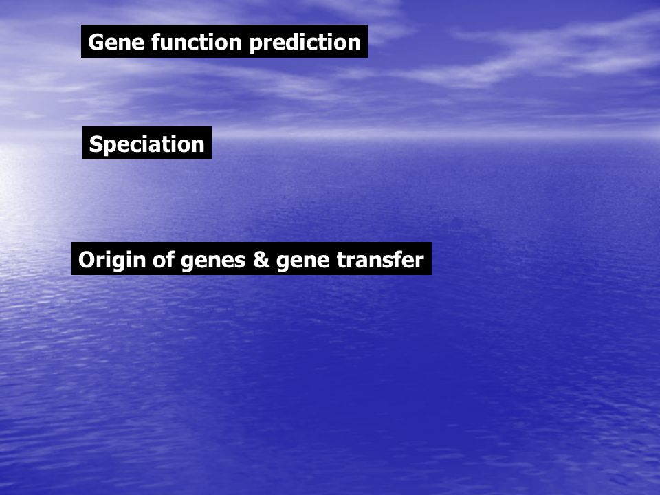 Gene function prediction