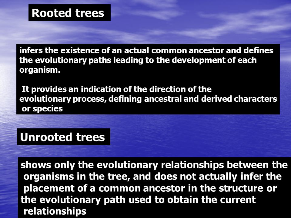 Rooted trees Unrooted trees