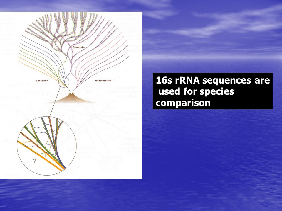 16s rRNA sequences are used for species comparison