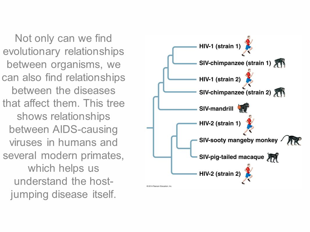 the sexual relations between the humans and primates This study examines the relationship between sexual dimorphism and degree of polygyny  primates, and humans  human relations area files.