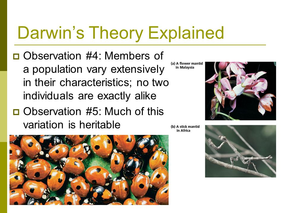 Darwin's Theory Explained