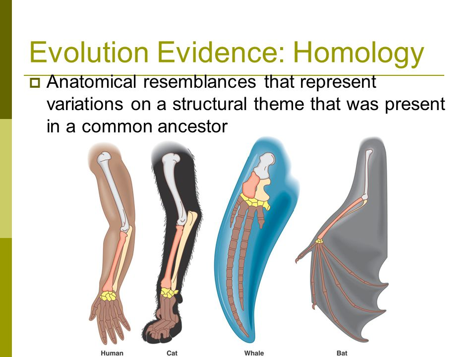 Evolution Evidence: Homology