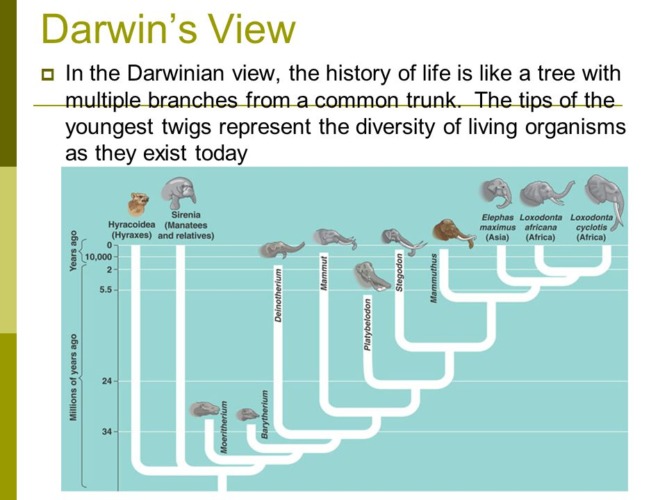Darwin's View