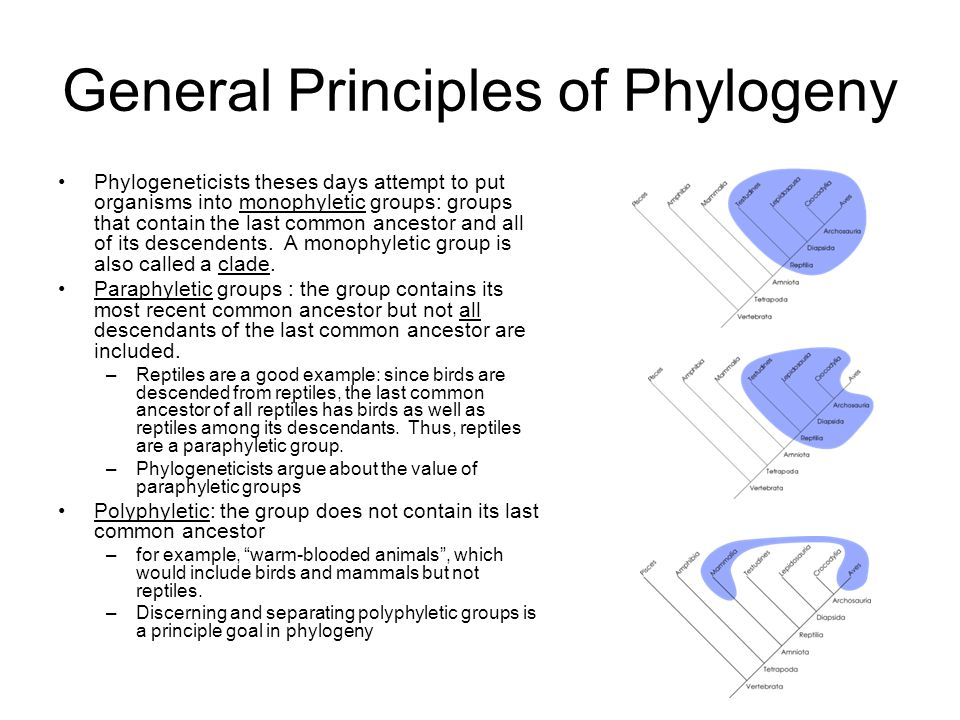 General Principles of Phylogeny