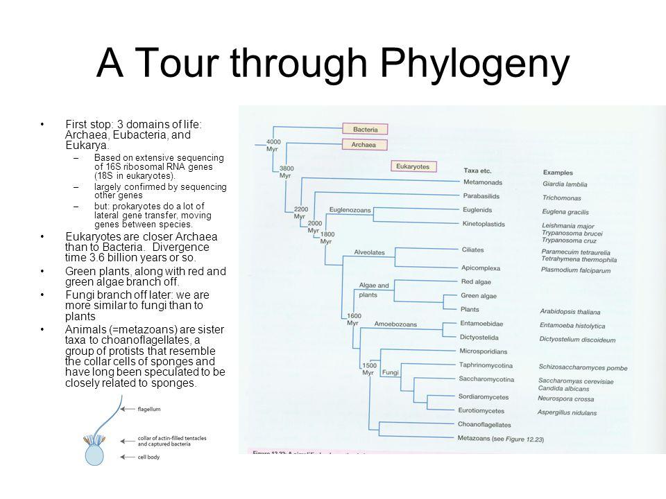 A Tour through Phylogeny