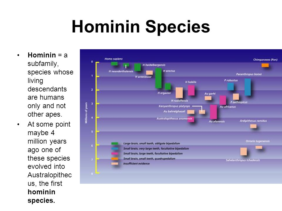 Hominin Species Hominin = a subfamily, species whose living descendants are humans only and not other apes.