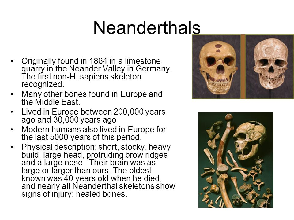 Neanderthals Originally found in 1864 in a limestone quarry in the Neander Valley in Germany. The first non-H. sapiens skeleton recognized.