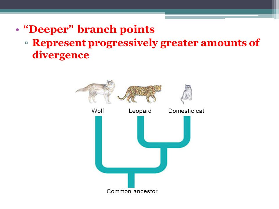 Deeper branch points