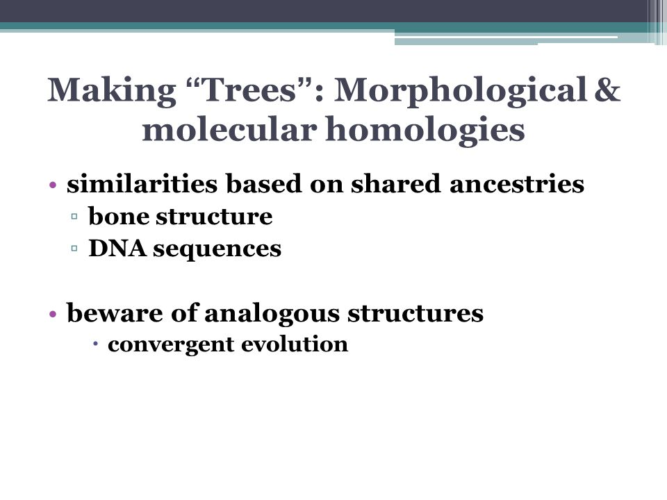 Making Trees : Morphological & molecular homologies