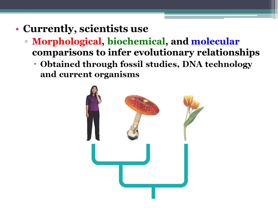Currently, scientists use