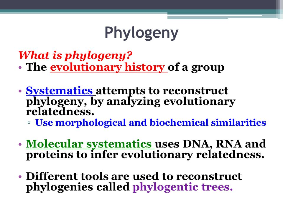 Phylogeny What is phylogeny The evolutionary history of a group