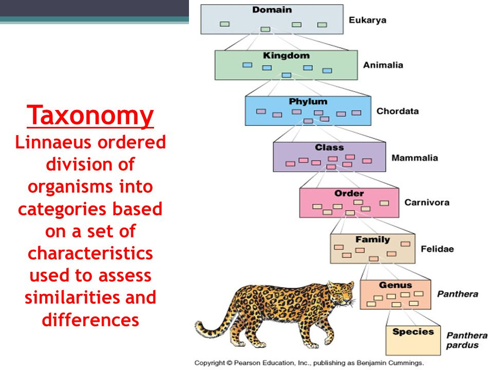 Taxonomy Linnaeus ordered division of organisms into categories based on a set of characteristics used to assess similarities and differences