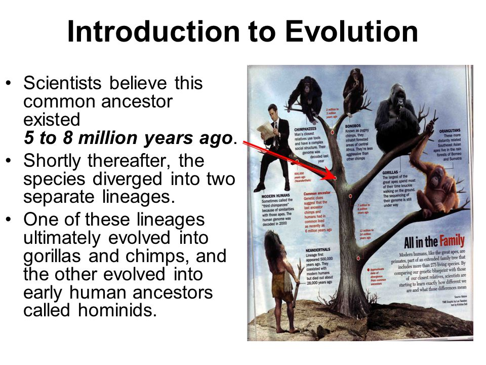 introduction to evolution Introduction to the evolution literature by gert korthof.