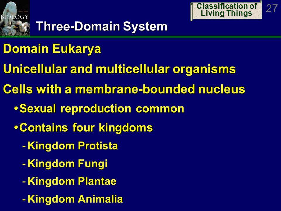 three domain system of classification The phylogeny of life three domains of life click on a domain to begin exploring until comparatively recently.