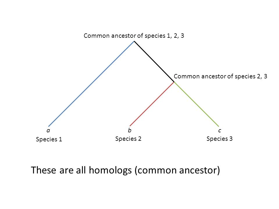 These are all homologs (common ancestor)