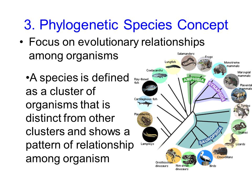 what is the evolutionary relationship among organisms